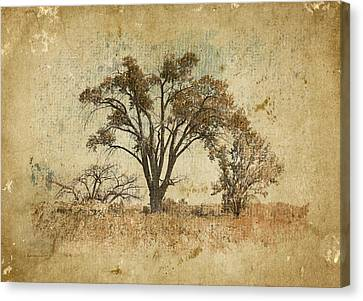 Trees In The Lowland Canvas Print