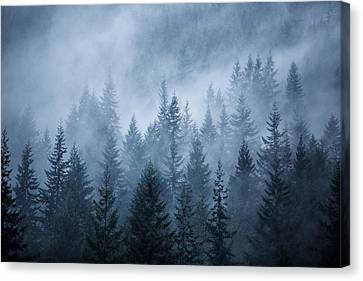 Trees In The Mist Canvas Print by Jim O'Neill