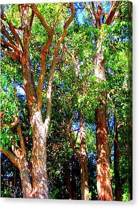 Alberi Canvas Print - Trees In The Nearby Bush by Gordana Stankovic