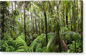 Trees In Tropical Rainforest, Eungella Canvas Print