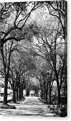 Trees In Waterfront Park Canvas Print by John Rizzuto