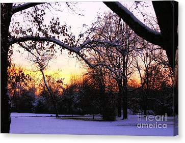 Trees In Wintry Pennsylvania Twilight Canvas Print by Anna Lisa Yoder
