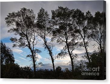 Trees Canvas Print by Louise Heusinkveld