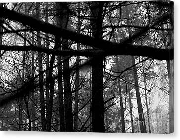 Canvas Print featuring the photograph How Many Triangles Can You See? by Maja Sokolowska
