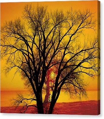 Trees Of Gold Canvas Print by Marty Koch
