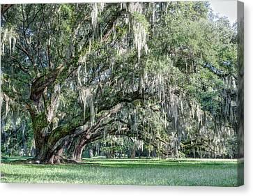 Trees Of Magnolia Canvas Print