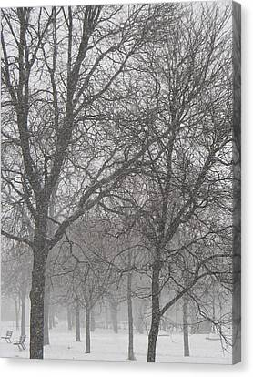 Trees Of Silence Canvas Print