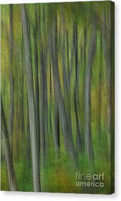 Trees Of The Forest Green - Blue Ridge Parkway Canvas Print by Dan Carmichael