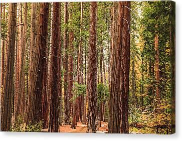 Trees Of Yosemite Canvas Print by Muhie Kanawati
