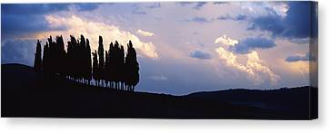 Trees On A Hill, Crete Senesi, Tuscany Canvas Print by Panoramic Images