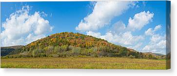 Trees On A Hill, Humphrey Road Canvas Print by Panoramic Images