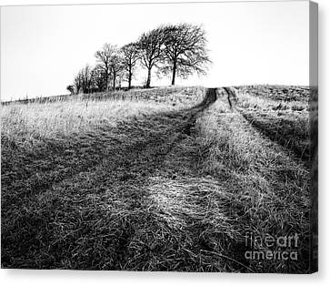 Trees On A Hill Canvas Print by John Farnan