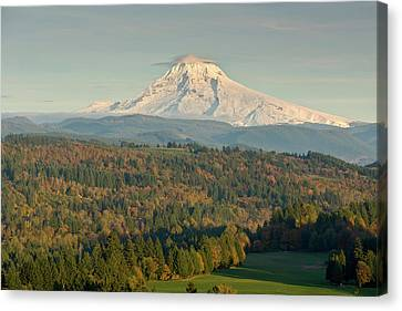 Trees On A Landscape With Mountain Canvas Print