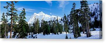Trees On A Snow Covered Mountain, Mt Canvas Print