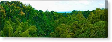 Trees On The Bay, Rempart And Mamelles Canvas Print by Panoramic Images