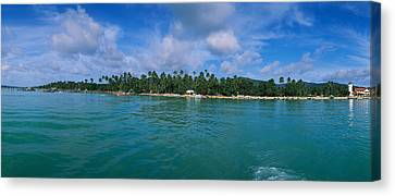 Trees On The Beach, Phuket, Thailand Canvas Print by Panoramic Images