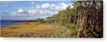 Chincoteague Canvas Print - Trees On The Coast, Barrier Islands by Panoramic Images