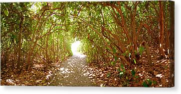 Trees On The Entrance Of A Beach Canvas Print by Panoramic Images