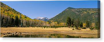 Flagstaff Canvas Print - Trees On The Mountainside, Kachina by Panoramic Images