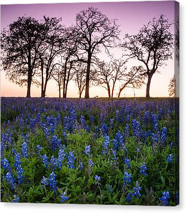 Trees On The Top Of Bluebonnet Hill - Wildflower Field In Lake Somerville Texas Canvas Print by Ellie Teramoto