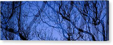 Ghostly Canvas Print - Trees by Panoramic Images