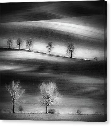 Tree Lines Canvas Print - Trees by Piotr Krol (bax)