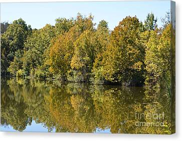 Trees Starting To Have Color  Canvas Print by Ruth  Housley