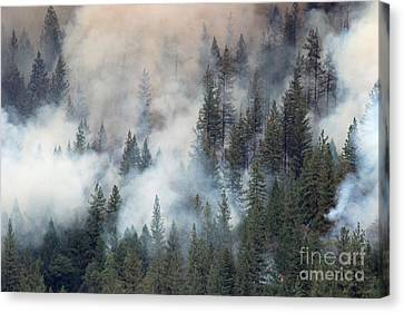 Beaver Fire Trees Swimming In Smoke Canvas Print by Bill Gabbert