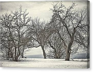 Trees Trees Trees Canvas Print by Gary Smith