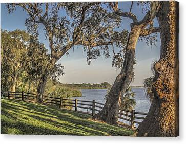 Canvas Print featuring the photograph Trees With A View by Jane Luxton