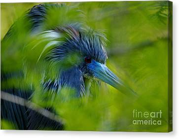 Canvas Print featuring the photograph Tri-colored Heron Concealed    by John F Tsumas
