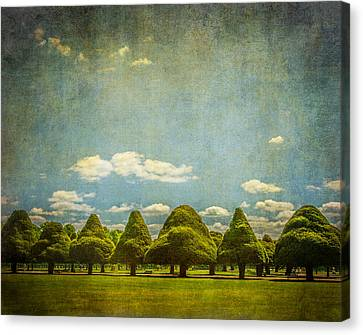 Triangular Trees 003 Canvas Print by Lenny Carter