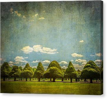 Triangular Trees 003 Canvas Print