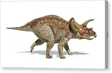 Triceratops Dinosaur Canvas Print by Leonello Calvetti