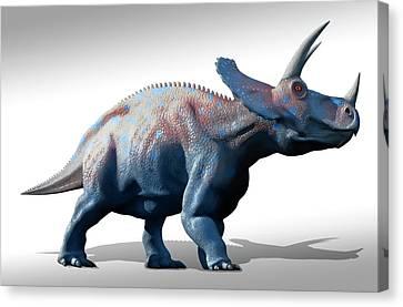 Triceratops Dinosaur Canvas Print by Mark Garlick