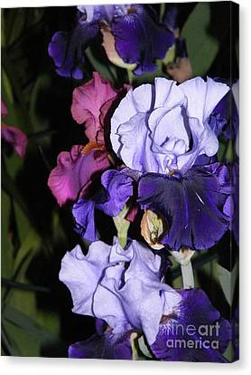 Tricolor Night Blossoms Canvas Print