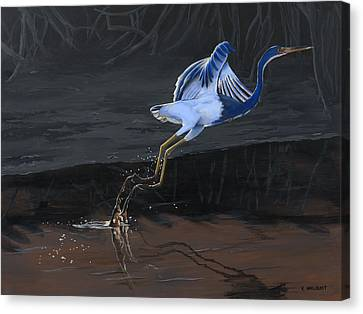 Tricolored Heron Canvas Print by Kirsten Wahlquist