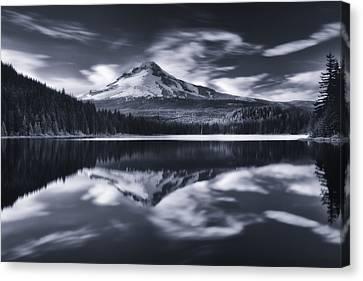Darren Canvas Print - Trillium Escape Monochrome by Darren  White