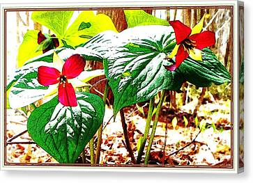Trillium In The Woods Canvas Print by Joy Nichols