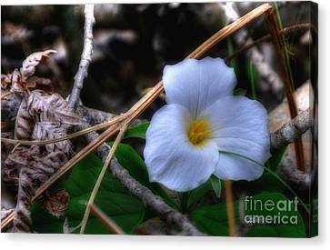 Canvas Print featuring the photograph Trillium On County C by Trey Foerster