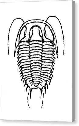 Trilobite Canvas Print by Richard Bizley