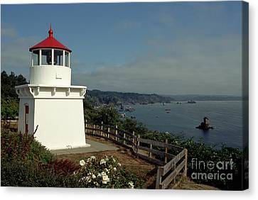 Trinidad Light Canvas Print by Sharon Elliott