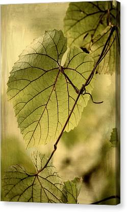 Trinity Grape Leaves Canvas Print by Amy Neal