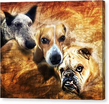 Trio Canvas Print