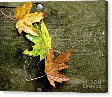 Green Lichen Canvas Print - Trio Of Leaves by Marilyn Smith