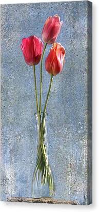 Trio Canvas Print by Terri Harper