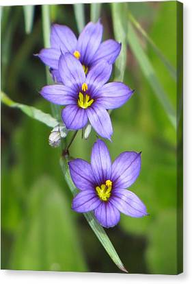 Triple Purple Canvas Print