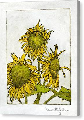 Triple Sunflowers Etching Canvas Print