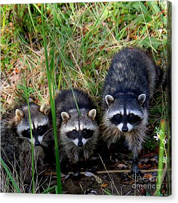 Canvas Print featuring the photograph Triplets by Bob and Jan Shriner