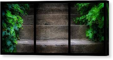 Triptych Ivy Steps Canvas Print by Steve Hurt